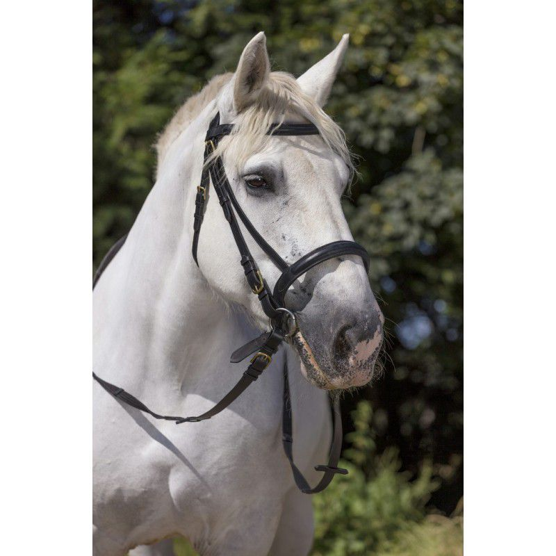 Bridon cheval de trait
